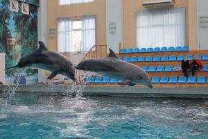 Дельфинарий Кисловодска